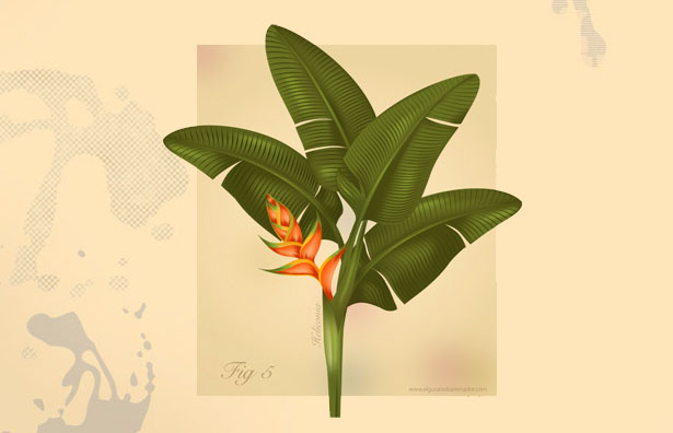draw of an heliconia